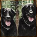 BlackLabs